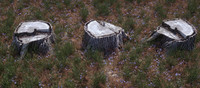 tree stump scanned stump1 3d max