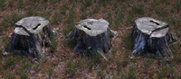 scanned old tree stump 3d model