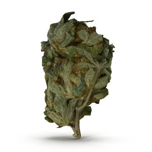 3ds max cannabis bud