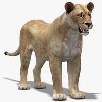 3d lioness lp model