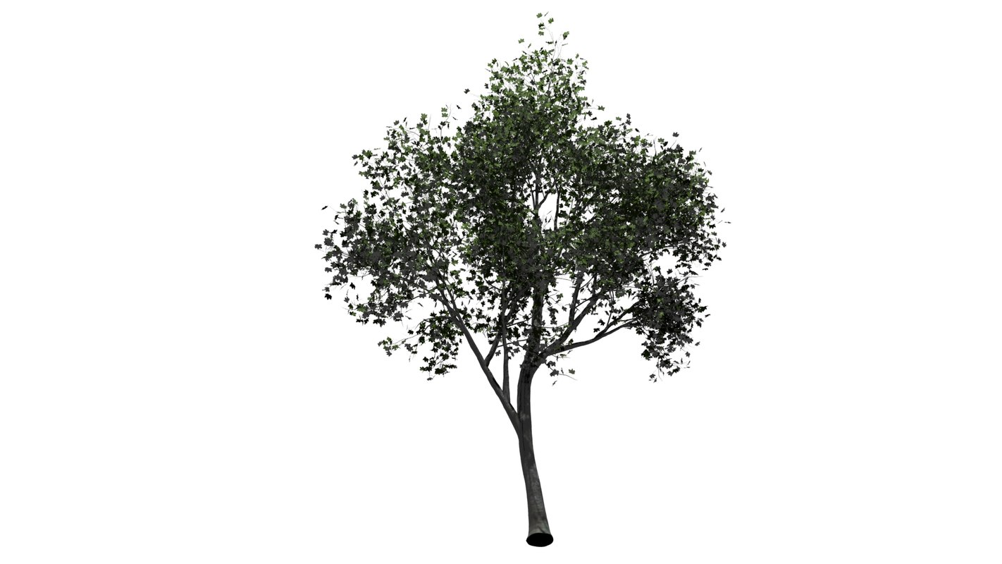 maple wood max
