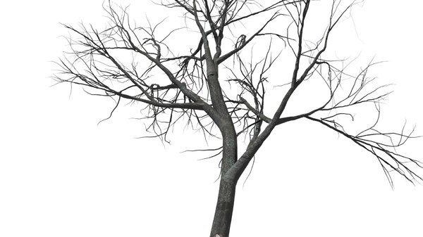 tree autumn 3d model