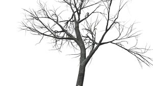 tree autumn 3d model