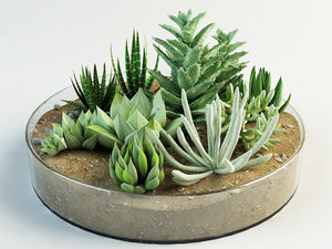 composition succulents 3d model