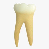 3d model primary molar lower