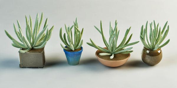max set plants pot