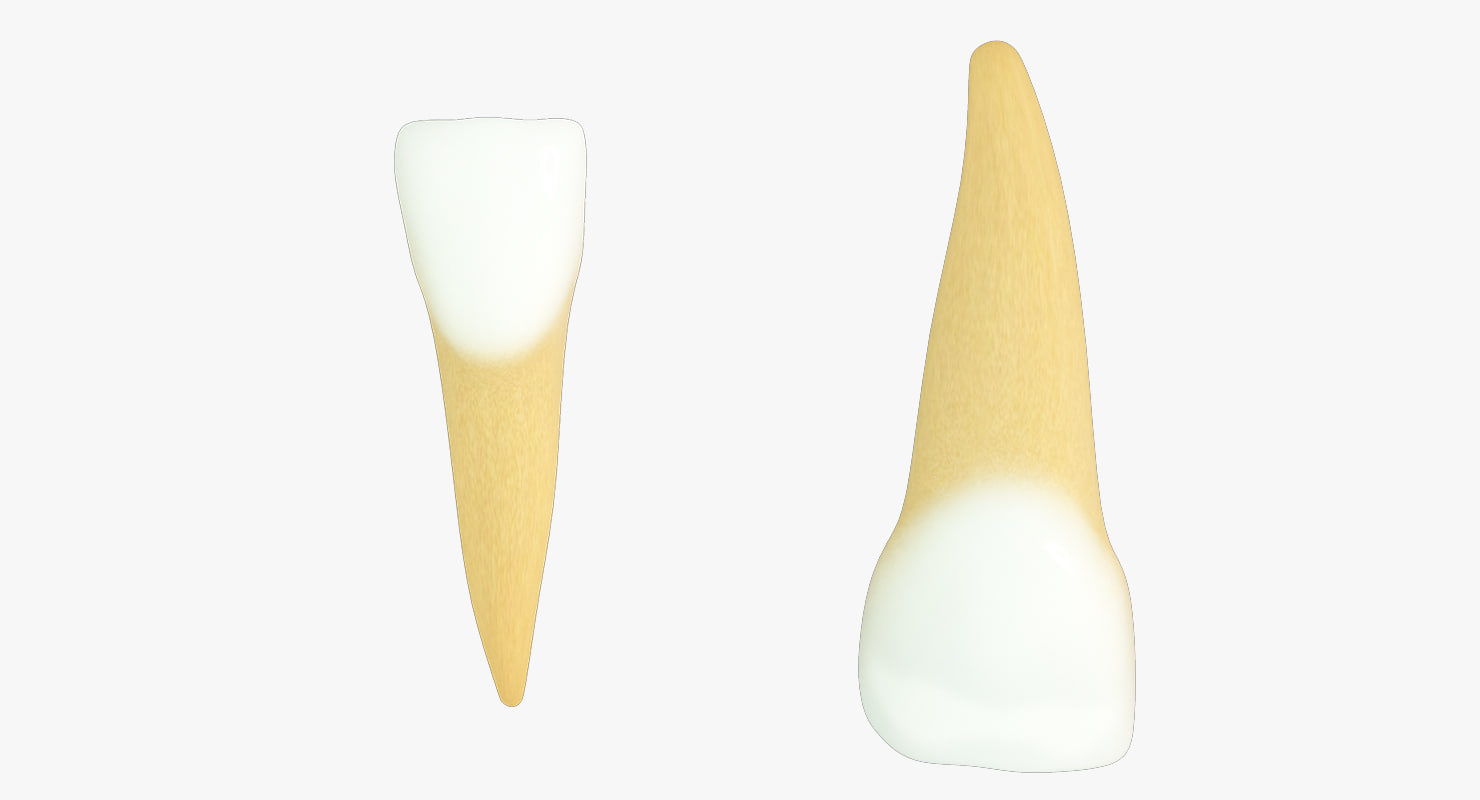 primary central incisors 3d max