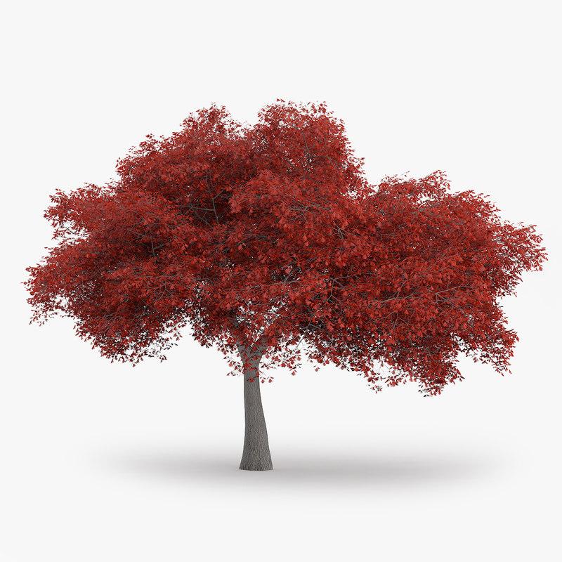3d northern red oak 11 model