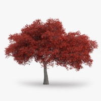 3d northern red oak 11 model