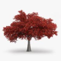3d model northern red oak 10m