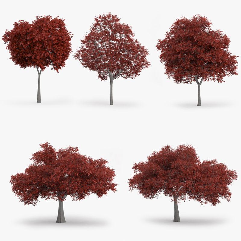 northern red oak trees obj