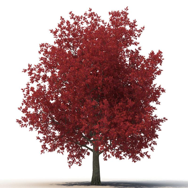 obj red maple tree autumn