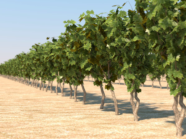 3d model pack vineyard