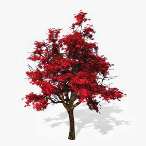 3d japanese maple tree