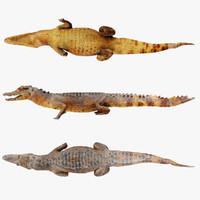realistic crocodile 3d max