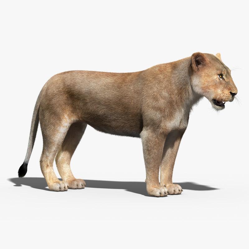 lioness fur max
