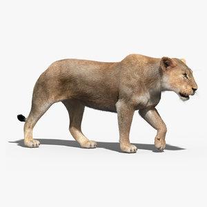 3d lioness fur rigged lion model