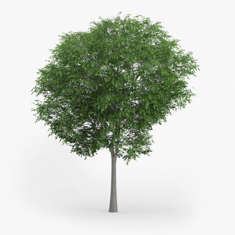 austrian oak 6 6m 3d obj