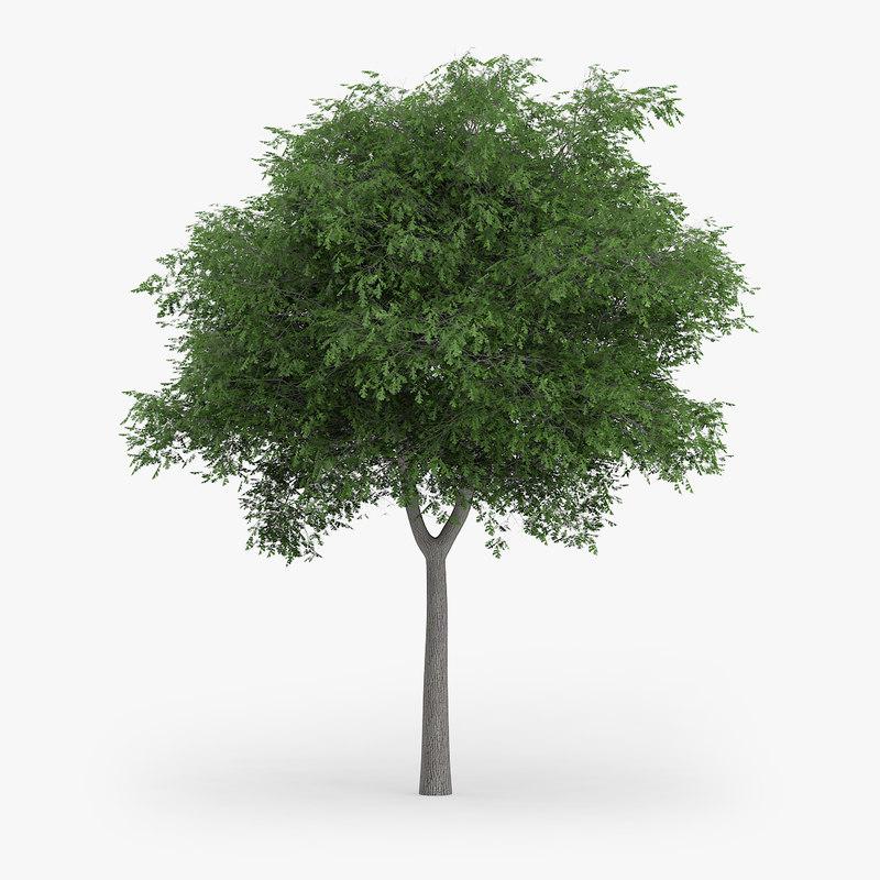 3d austrian oak 7 7m