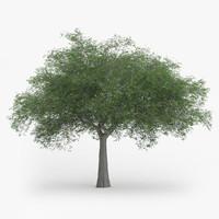 austrian oak 11 4m 3d max