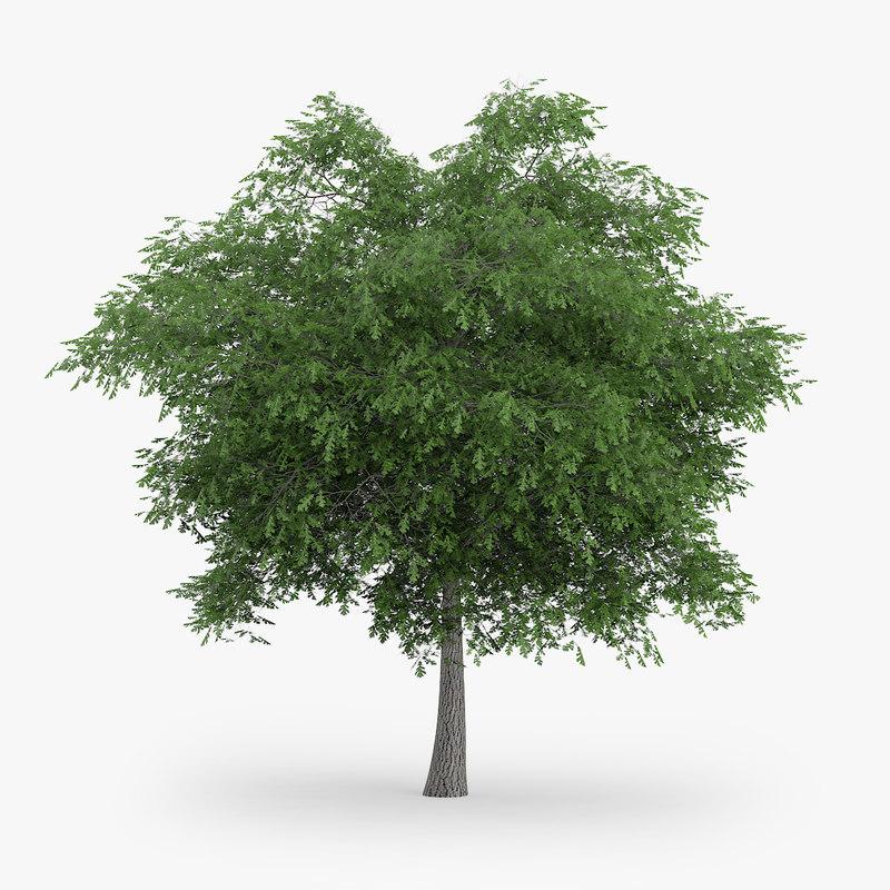 max austrian oak 5 8m