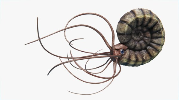 obj ammonite
