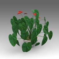 3d model anthurium plant house