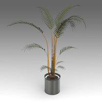 3d model arecapalm plant house