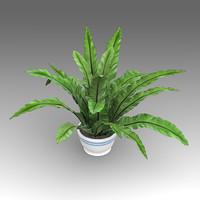 Asplenium Plant_003