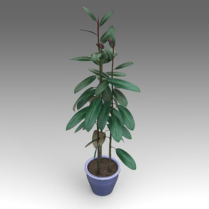ficuselastica plant house fbx