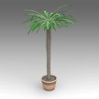 pachypodium plant house fbx