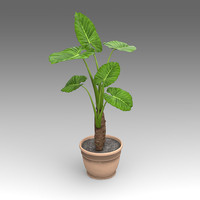 Philodendron Plant_007