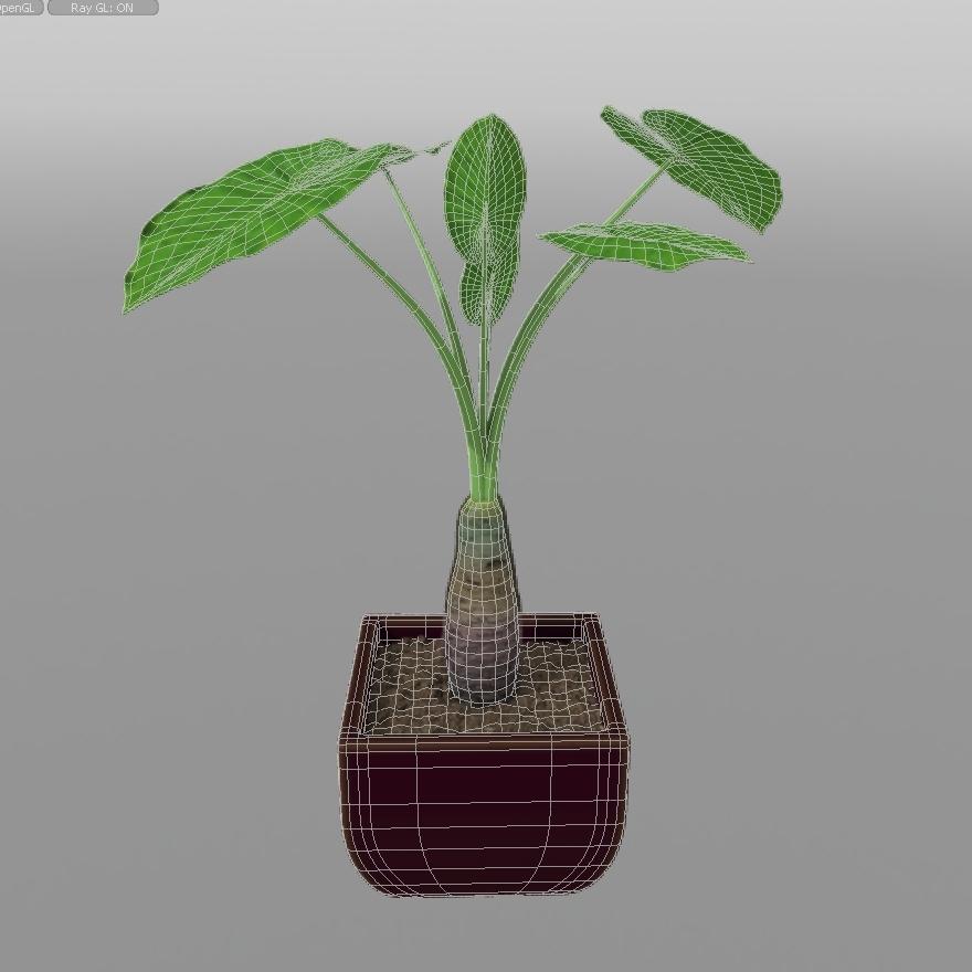 Alocasia Calidora Plant House 3d Model