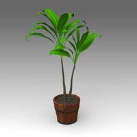 fbx cordyline fruticosa plant house