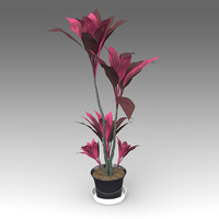 Cordyline Terminalis Plant_016