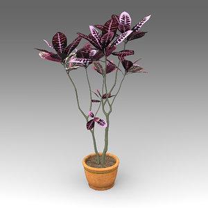 3d codiaeum pictum plant house model