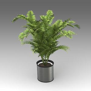 3d model areca palm plant