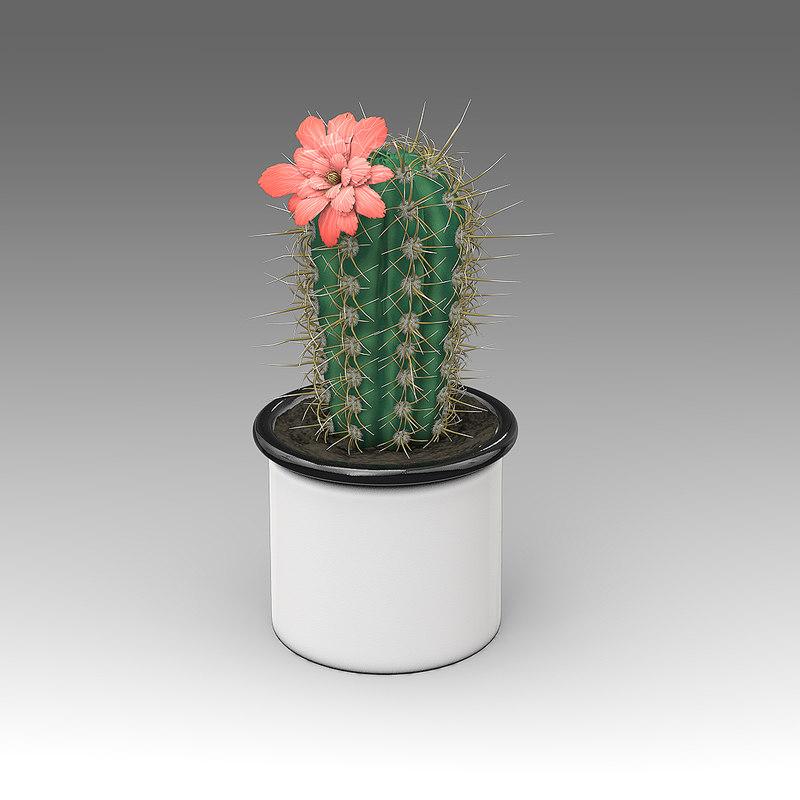 3d model of echinocereus plant house