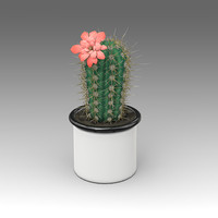 3d model of echinocereus plant house