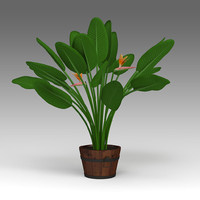 Strelitzia Plant_022