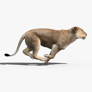 lioness fur animation 3d max