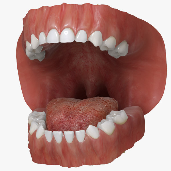 primary dentition gums mouth 3d max
