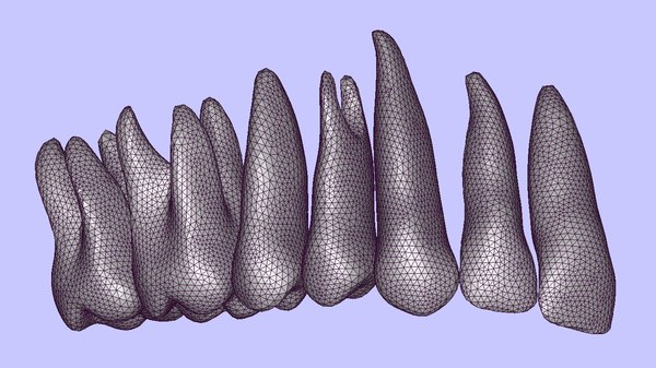 3ds max anatomically teeth