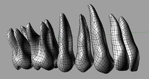 anatomically teeth 3d model