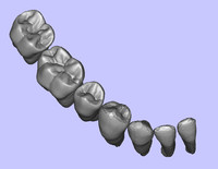 anatomically teeth 3d model