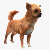Chihuahua with Fur