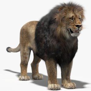3d lion fur model