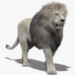 lion white fur mane 3d model
