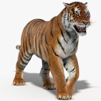 Tiger (Animated, Fur)