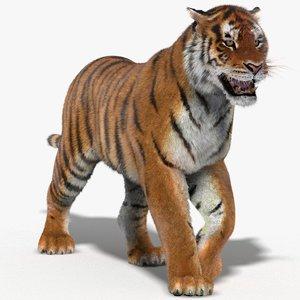 tiger fur animation cat max